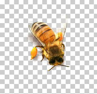 Bee Honeycomb PNG