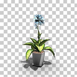 Flowerpot Houseplant Vase Agave PNG