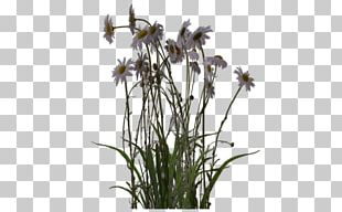 Plant Digital Art Artist PNG