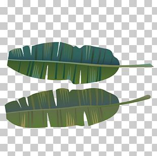 Green Banana Leaves PNG