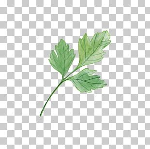 Leaf Plant Watercolor Painting Yard PNG