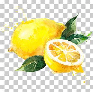 Watercolor Painting Lemon Drawing PNG