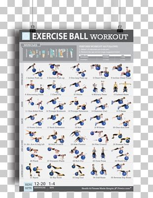 Exercise Balls Bodyweight Exercise Fitness Centre Exercise Bands PNG