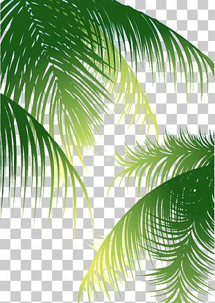 Coconut Arecaceae Euclidean PNG