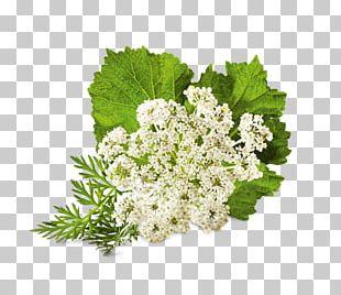 Flower Medicinal Plants Floral Design Auglis PNG