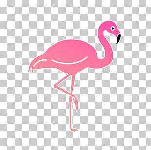 Las Canciones Que Escribí Mientras Volaba Bird Beak Feather Compact Disc PNG