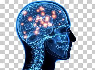 Blue Brain Project Human Brain Cognitive Training Neuron PNG