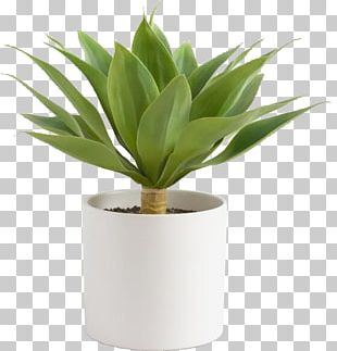 Cost Plus World Market Flowerpot Century Plant Furniture PNG