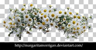 Flower Common Daisy Desktop Floral Design PNG