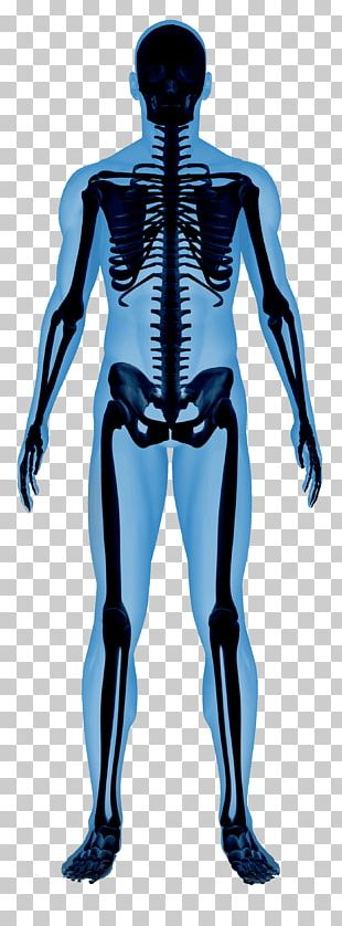 Human Skeleton Essential Of Human Anatomy And Physiology Human Body PNG