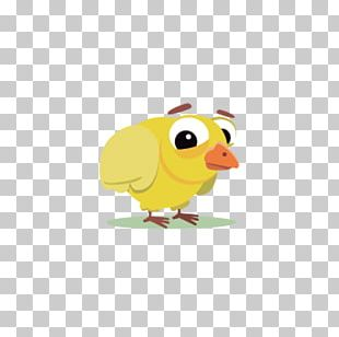 Bird Chicken Cartoon PNG