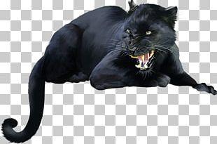 Black Cat Black Panther Bombay Cat Dog Kitten PNG