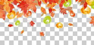 Autumn Leaf Color Autumn Leaf Color Illustration PNG