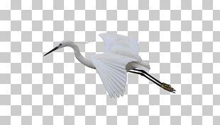 Cygnini Bird Crane Feather Beak PNG
