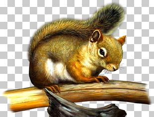 Tree Squirrel Chipmunk Rodent PNG