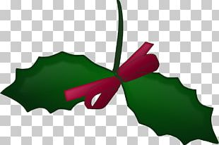 Christmas Mistletoe American Holly PNG