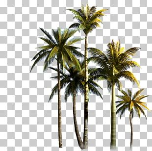 Coconut Tree Asian Palmyra Palm Euclidean PNG