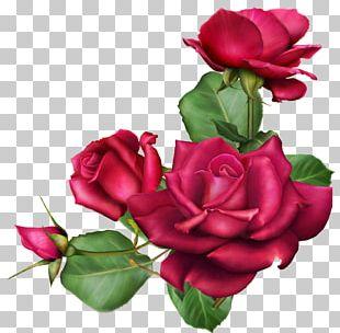 Autumn's Wish Cut Flowers Garden Roses Flower Bouquet PNG