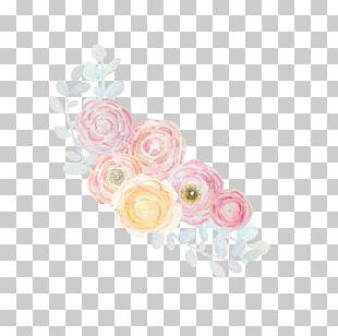 Petal Textile Rosaceae Floral Design Pattern PNG