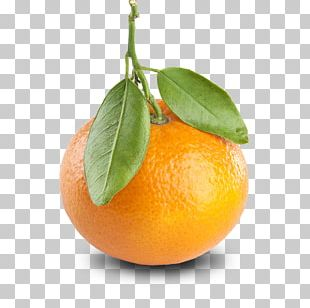 Tangerine Mandarin Orange Clementine Fruit Color PNG