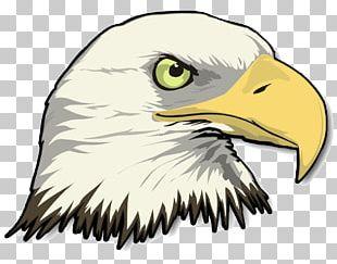 Bald Eagle Drawing PNG