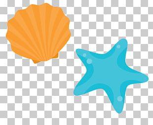 Shore Seashell Beach PNG