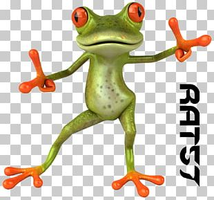 Frog Animation 3D Computer Graphics Cartoon PNG