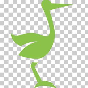 Goose Cygnini Duck Beak Anatidae PNG