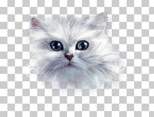 Asian Semi-longhair Ragamuffin Cat Siberian Cat Persian Cat Turkish Angora PNG