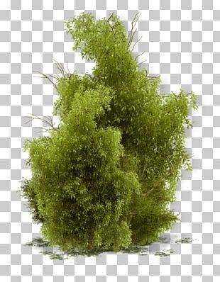Shrub Tree Landscape PNG