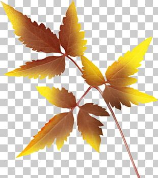 Leaf Autumn Leaves Painting PNG