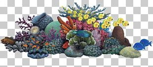 Coral Reef Sea Ocean PNG
