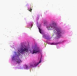 Watercolor Purple Flowers PNG