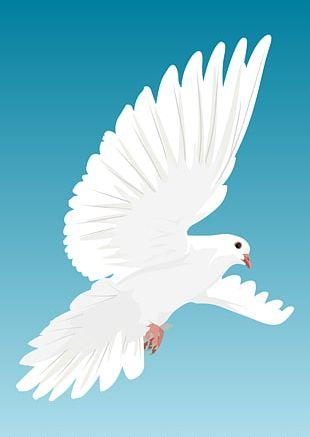 Columbidae Flight Bird Domestic Pigeon Stock Photography PNG