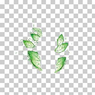 Leaf Green Drop Water PNG