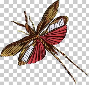 Butterfly Interesting Insects Beetle Moth PNG