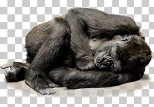 Irish Wolfhound Common Chimpanzee Gorilla Ape Primate PNG