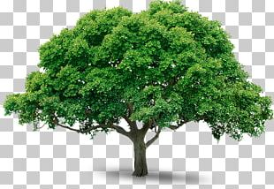 Tree Sticker Business PNG