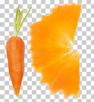 Baby Carrot Gemüseschneider Citrus × Sinensis Vegetable PNG