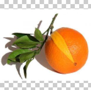 Clementine Bitter Orange Tangerine Mandarin Orange PNG