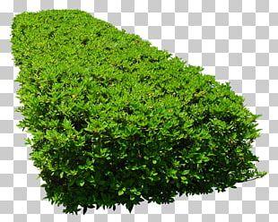 Shrub Tree Flower Garden Vegetation PNG