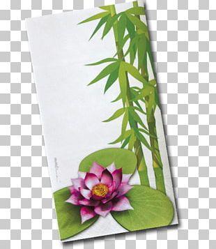 Floral Design Flowerpot Leaf Flowering Plant PNG