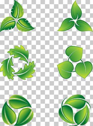 Leaf Logo Icon PNG