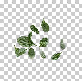 Leaf Herb Plant Stem PNG