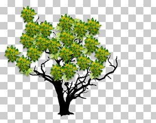 Woody Plant Tree Twig Leaf PNG