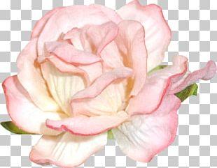 Garden Roses Blog Floral Design PNG