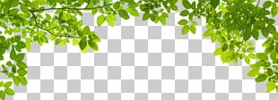 Leaf Green Stock Photography Shutterstock PNG