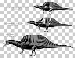 Spinosaurus Tyrannosaurus Baryonyx Carcharodontosaurus Giganotosaurus PNG