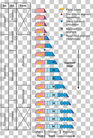 Stratigraphic Column Geology Education Stratigraphy Earth Science PNG