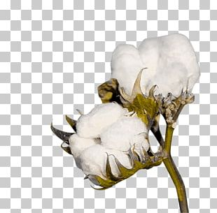 Cotton Crop Industry Textile Agriculture PNG